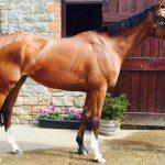Robert Stephens Horse Racing Team