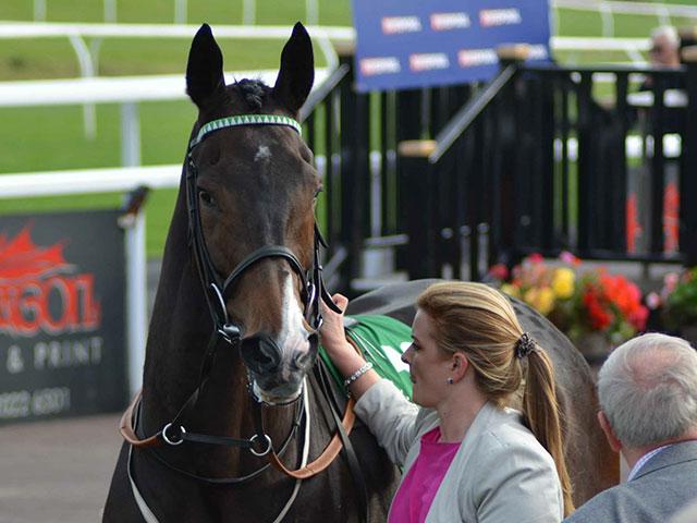 horsesintraining100