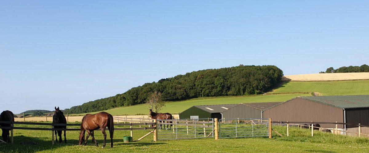 New paddocks